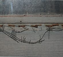 Wire Fence by Peter Baglia