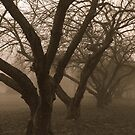 Echoes in the Fog by reindeer