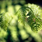 Fern leaf by Adriano Carrideo