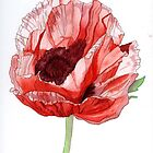 Single Red Poppy by Esmee van Breugel