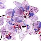 Pink and Lilac Orchids by Esmee van Breugel