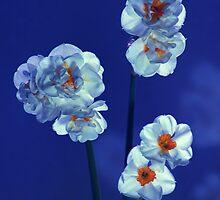 Daffodils by shadedfaces