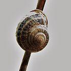 Snail on a Steeeek by Ron Russell