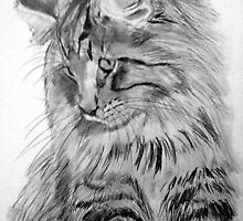 Norwegian Forest Cat by DianeL