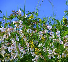 Summer Hedgerows by Fara