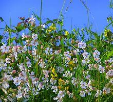 Summer Hedgerows by Fara