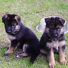 2 pups  by janfoster