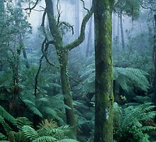 Winter morning on Mount Dandenong by Alex Fricke