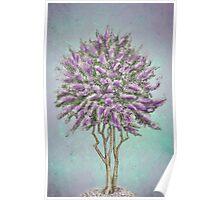 Crepe Myrtle Lavender Poster