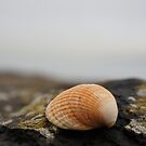 Shell on the beach by Dean Agnew