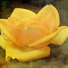 Enigma Of The Yellow Rose #4 by MotherNature