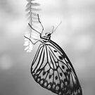 Butterfly 7 by Sunshinesmile83