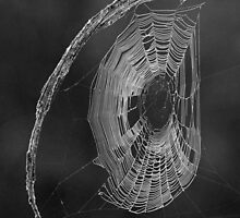 A web of deceit ! by jozi1