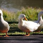 Three Little Ducks by yolanda