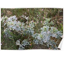 SEA HOLLY . Poster