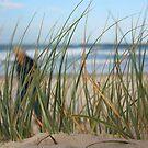 Beach Grass  by Carol James