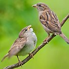House Sparrows by M.S. Photography & Art