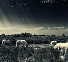 Horses of Camargue by Roberto Pagani