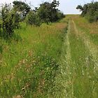 A prairie trail by Jim Sauchyn