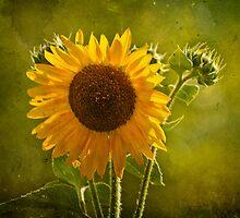 Sunflower by Lightengr