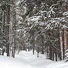 Woods in Winter by Eric Glaser