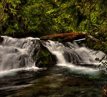 LET THE FLOW BEGIN by Cynthia Broomfield