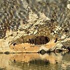 Crocodile Rock, Geikie Gorge, Kimberley, Western Australia by bevanimage