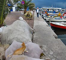 The harbour cat.. by ronsaunders47