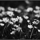 Buttercups In Black And White by ReidOriginals