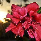 Flower by codieglann