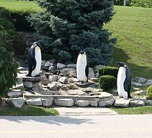 Three Penguins by Barry W  King