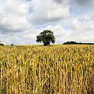 &#x27;Tree In Wheat Field&#x27; by Rob Booth