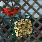 Cardinal at My Feeder by Bill  Watson