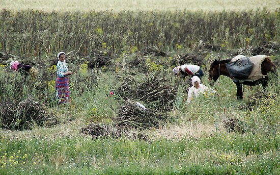 Working in the Fields - On the Road to Fes, Morocco by Debbie Pinard