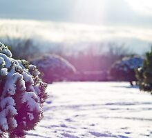 Snow Land by sxhuang818