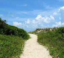 Pathway To The Beach by Cynthia48