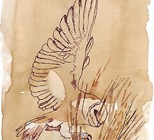 Barn Owl hunting 1 by Maree  Clarkson