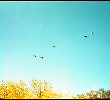 Seven Ducks Over Trees by Photonmixer