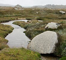 Streaming to the Snowy River from Mt Kosciuszko National Park by Timothy John Keegan