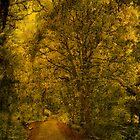 Shades of Autumn by Tsitra