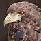 Pine Cone Eagle by Krys Bailey