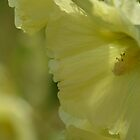 The softest yellow by Nicole W.