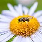 Fly on a Flower by Reese Ferrier