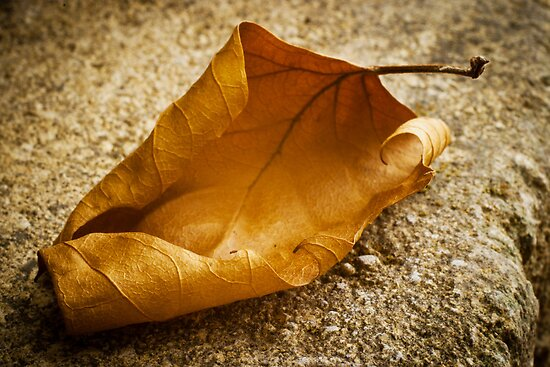 Autumn Leaf on Stone by Ellesscee
