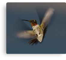 Humming Bird! Canvas Print