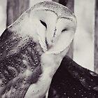 barn owl by beverlylefevre