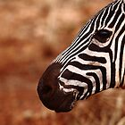 Zebra up close by Karue