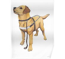 Guide Dog Poster