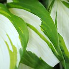 Abstract Hosta Leaves by goddarb