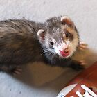 Ferrets go lickety lick by woodlandninja